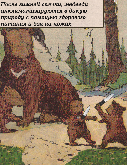 ведмеді після сплячки